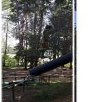 in azione sugli alberi