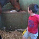 Pranzo secco del cavallo