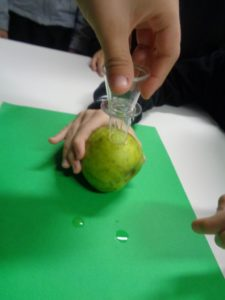Carotiamo una mela